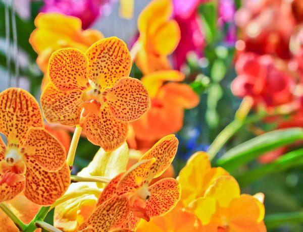 vystava_kvetov