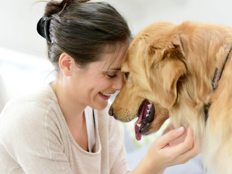 Liečivá sila zvierat